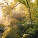forêt-Jean-Yves-Guillaume-Brest